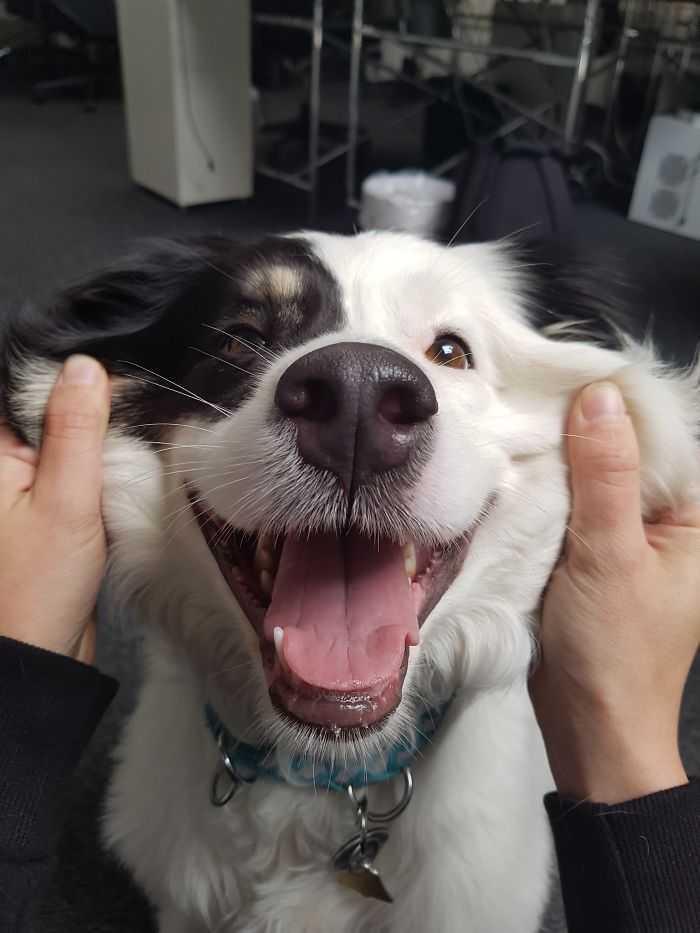 Собачьи щечки