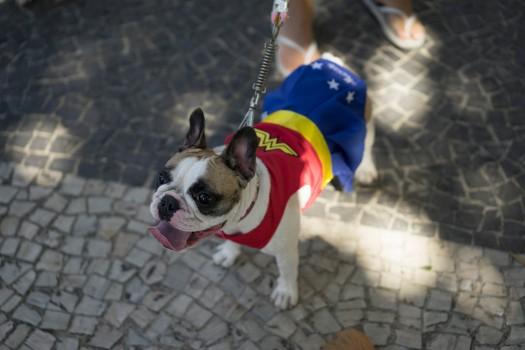 Собаки на карнавале в Рио