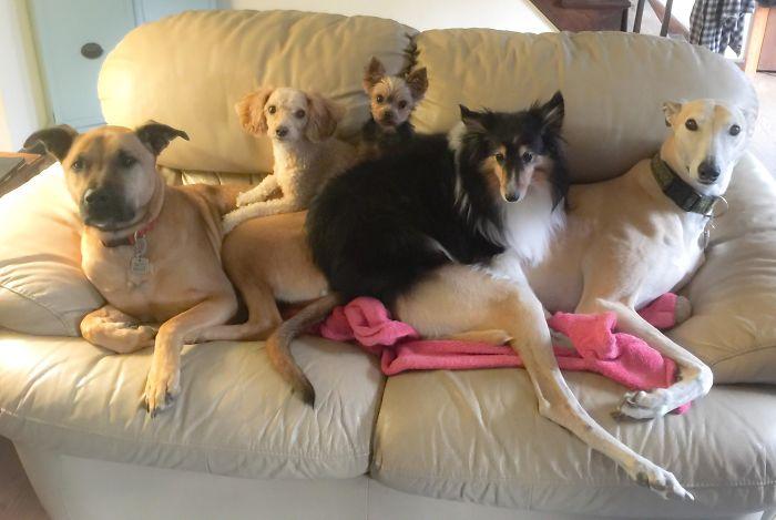 Собак много не бывает!