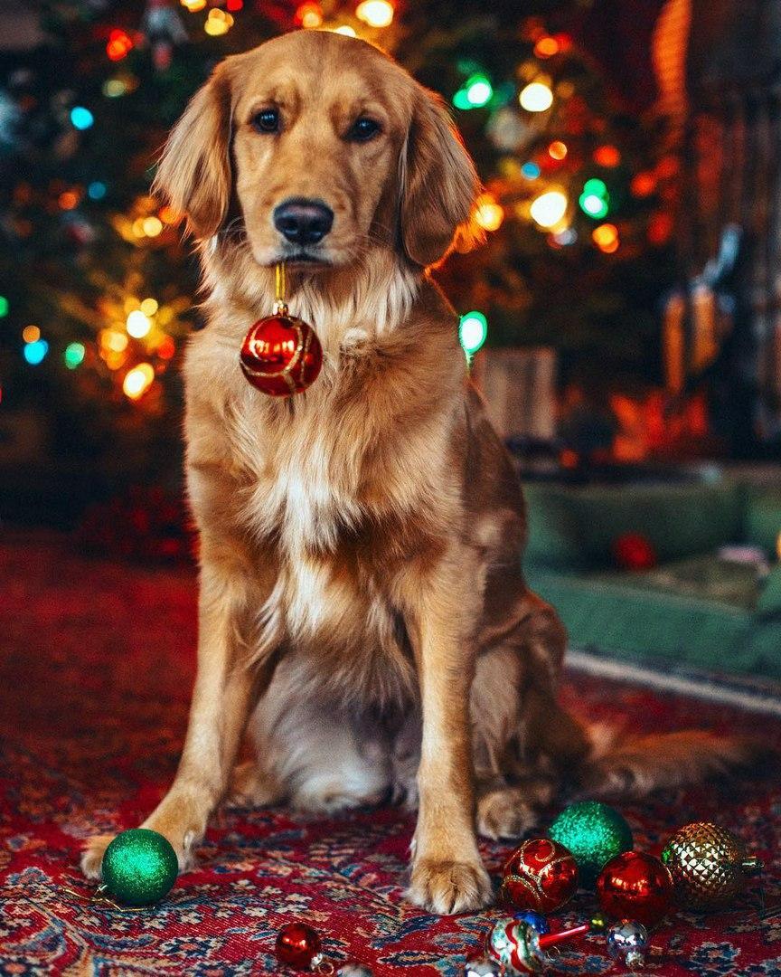 Рождественский пес