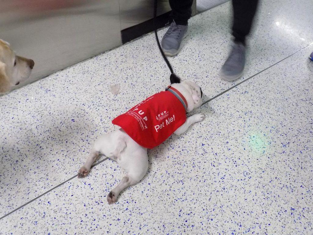 """Погладь меня """"Собаки в аэропорту"""""""