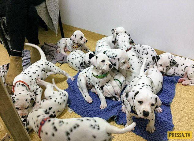 18 щенков