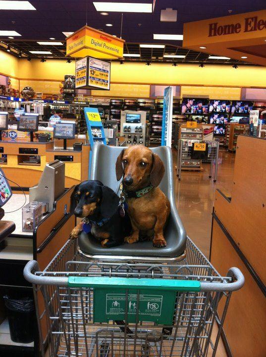 Собаки в тележке
