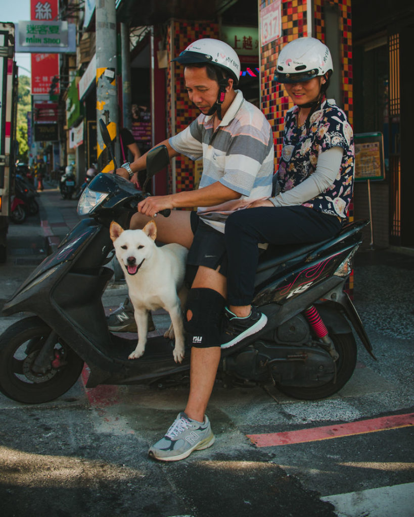Собака на скутере