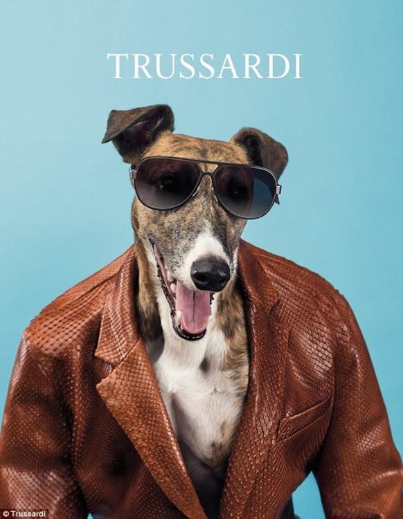 Собаки в рекламе