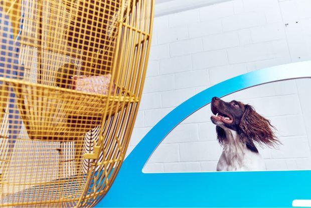 Современное искусство для собак