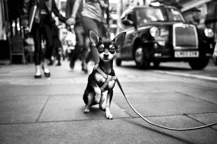 Уличные фото собак (фотограф Ален Шаллер)