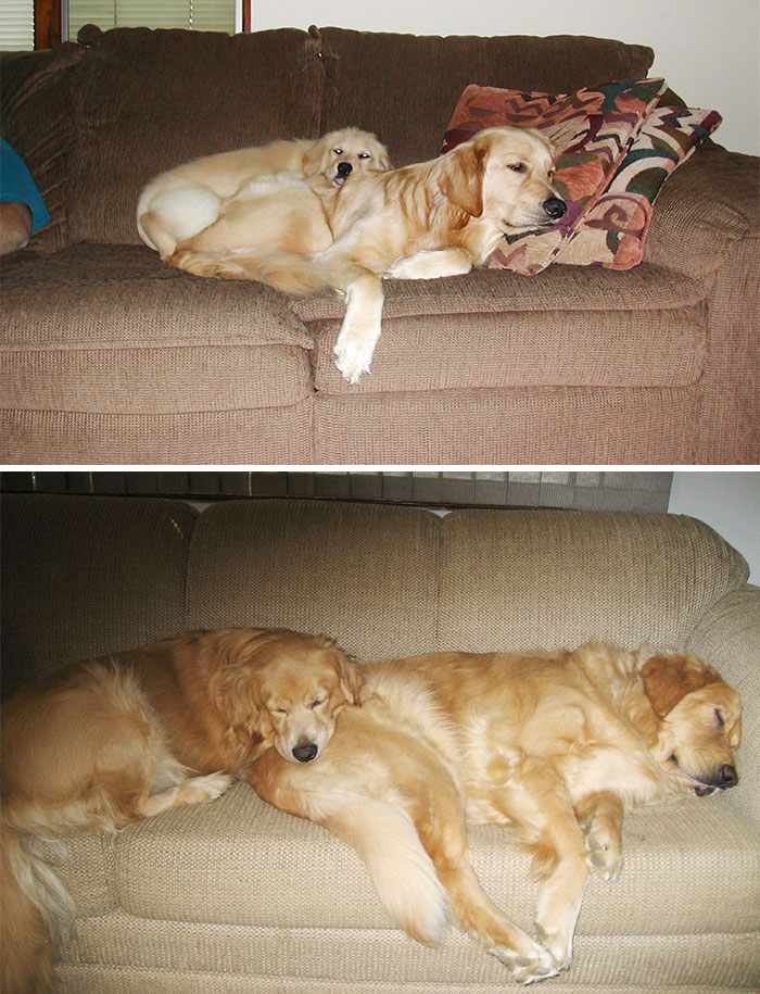 Вместе выросли