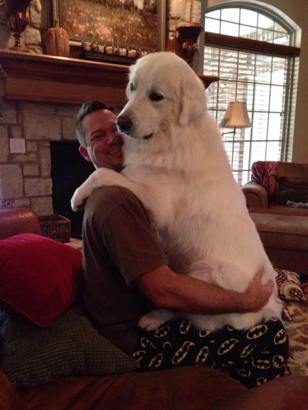 Почему большая собака - это всегда плюс?