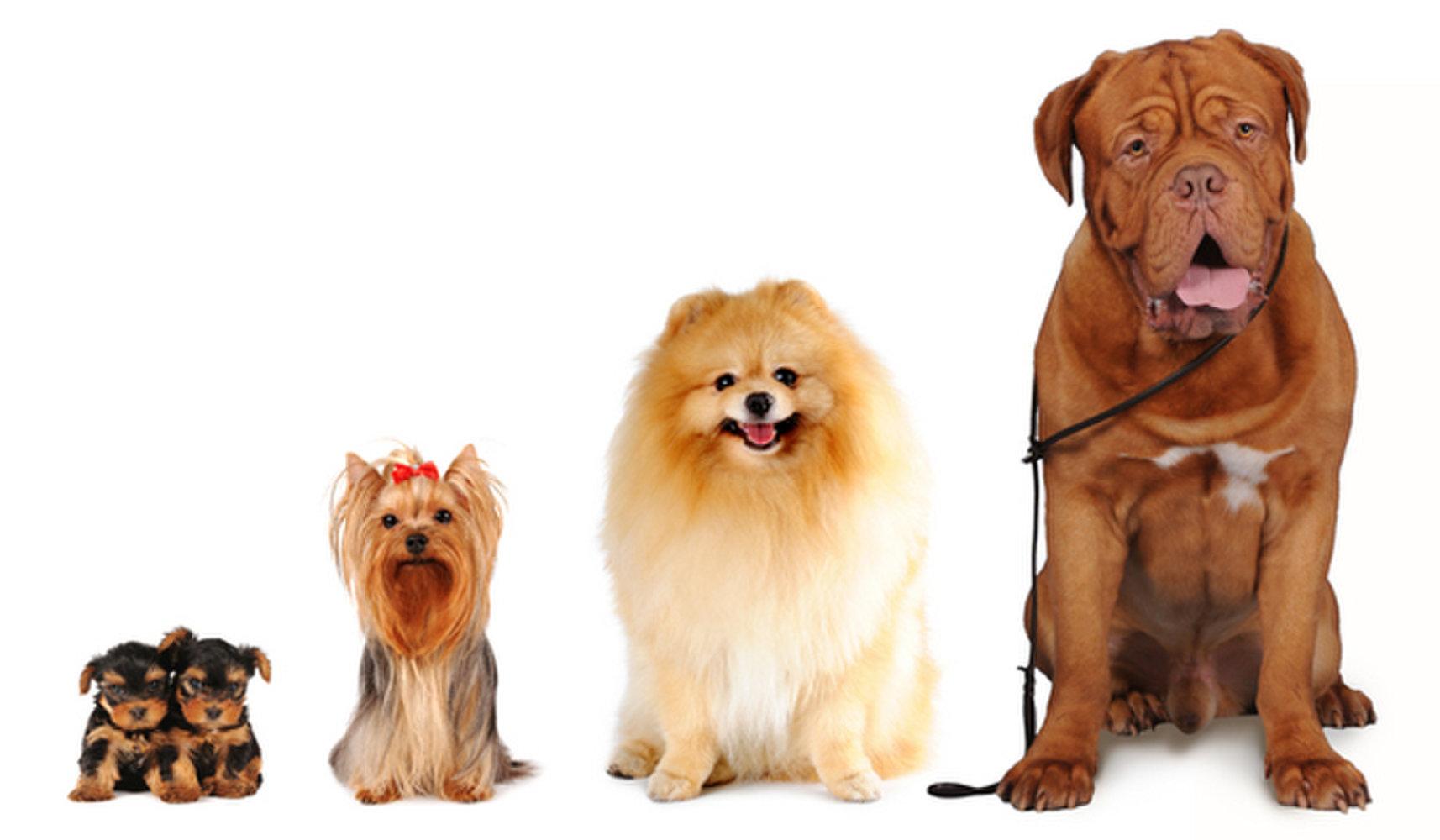 Классификация пород собак по размерам: какие бывают?