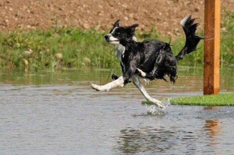 Когда хозяин словил момент, или ТОП-20 курьезных фото с собаками