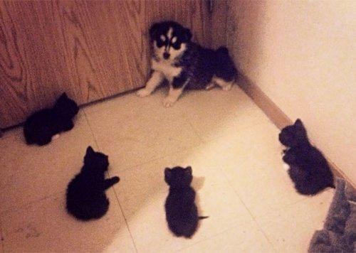 Непростые взаимоотношения кошек и собак
