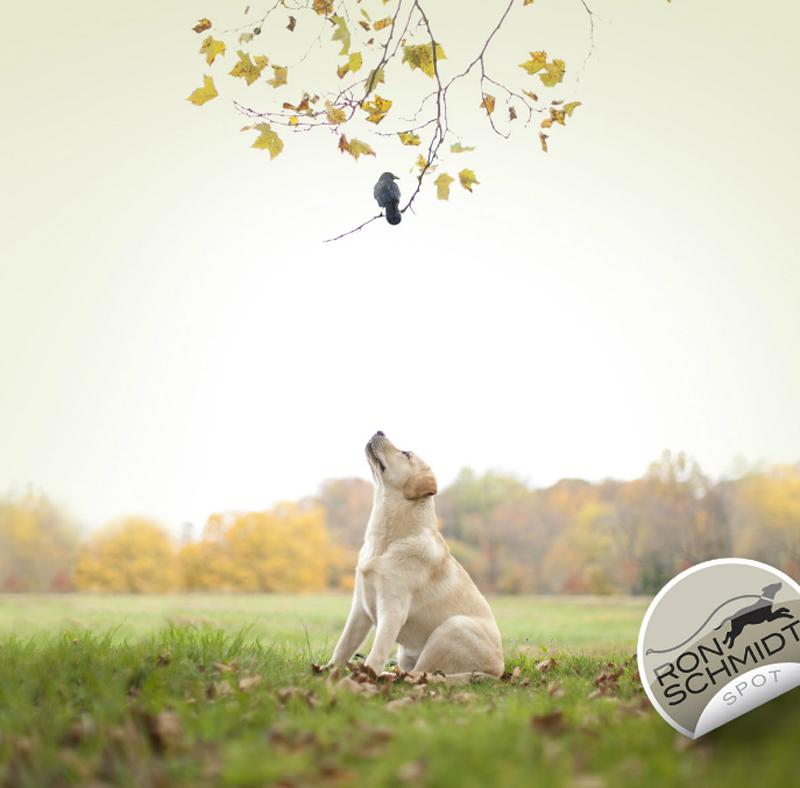 Фото собак от Рона Шмидта