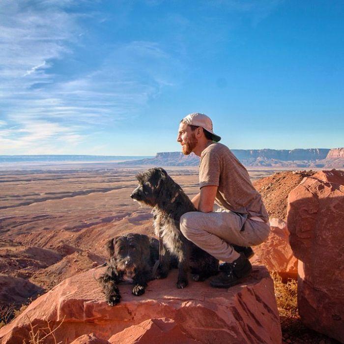 Щенки в пустыне