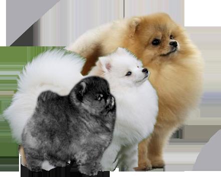 Шпицы и примитивные породы собак: 5 группа