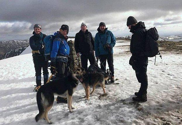 Собаки в горах