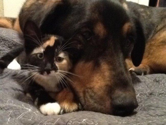 Собака и кошка неразлучники