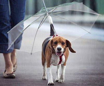 Что мне дождик проливной...