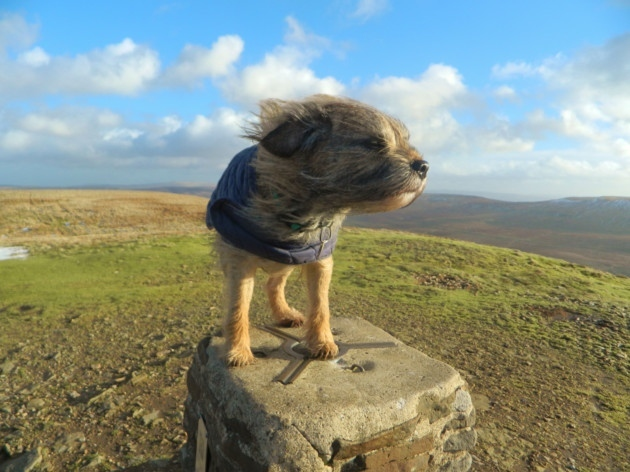 Собаки против ветра
