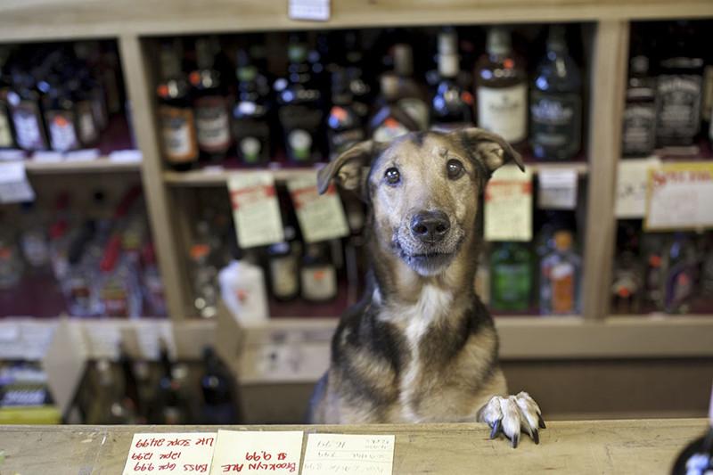 20 фотографий пожилых собак